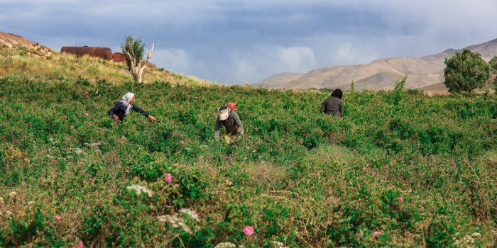 سفری به لاله زار کرمان