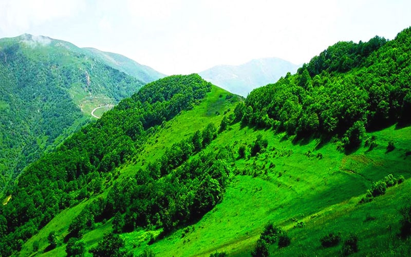 جنگل ارسباران از جاهای دیدنی تبریز